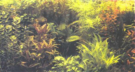 Густо засаженный голландский аквариум