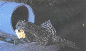Книги по аквариумистике: http://agaided.clan.su/news/knigi_po_akvariumistike/2014-03-12-153