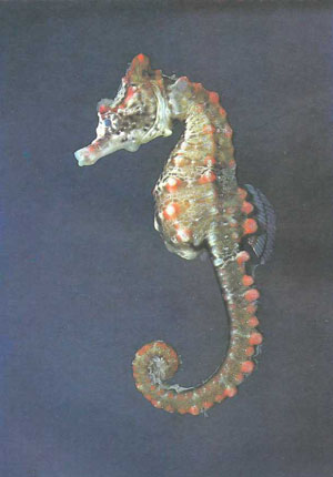 http://aquariumistika.ru/str/0587/04.jpg
