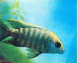 http://aquariumistika.ru/str/1020/310.jpg