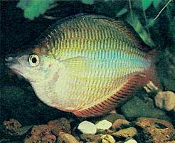 http://aquariumistika.ru/str/1021/354.jpg