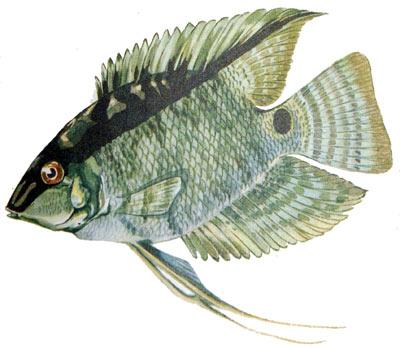 http://aquariumistika.ru/str/1338/01.jpg
